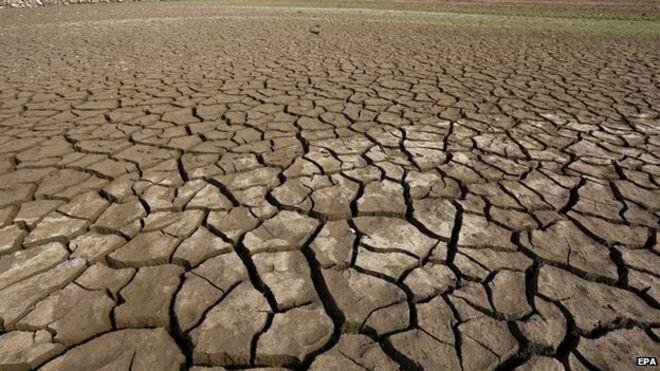 Deforestazione e mutamento climatico